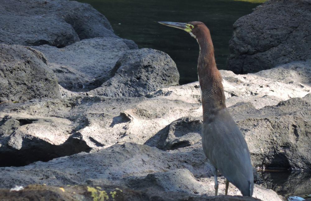 Aves en el Parque nacional Iguazu