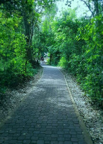 sendero verde en cataratas del Iguazú