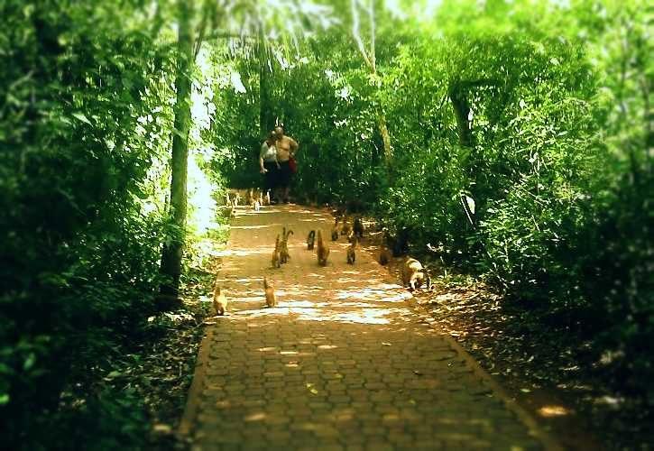 cuaties en sendero verde catartas